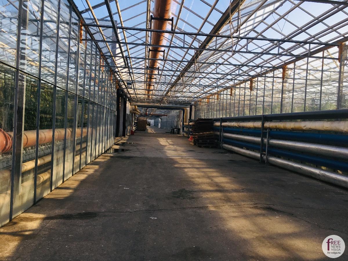 Изображение - Кто выращивает овощи 1540401622_563344602