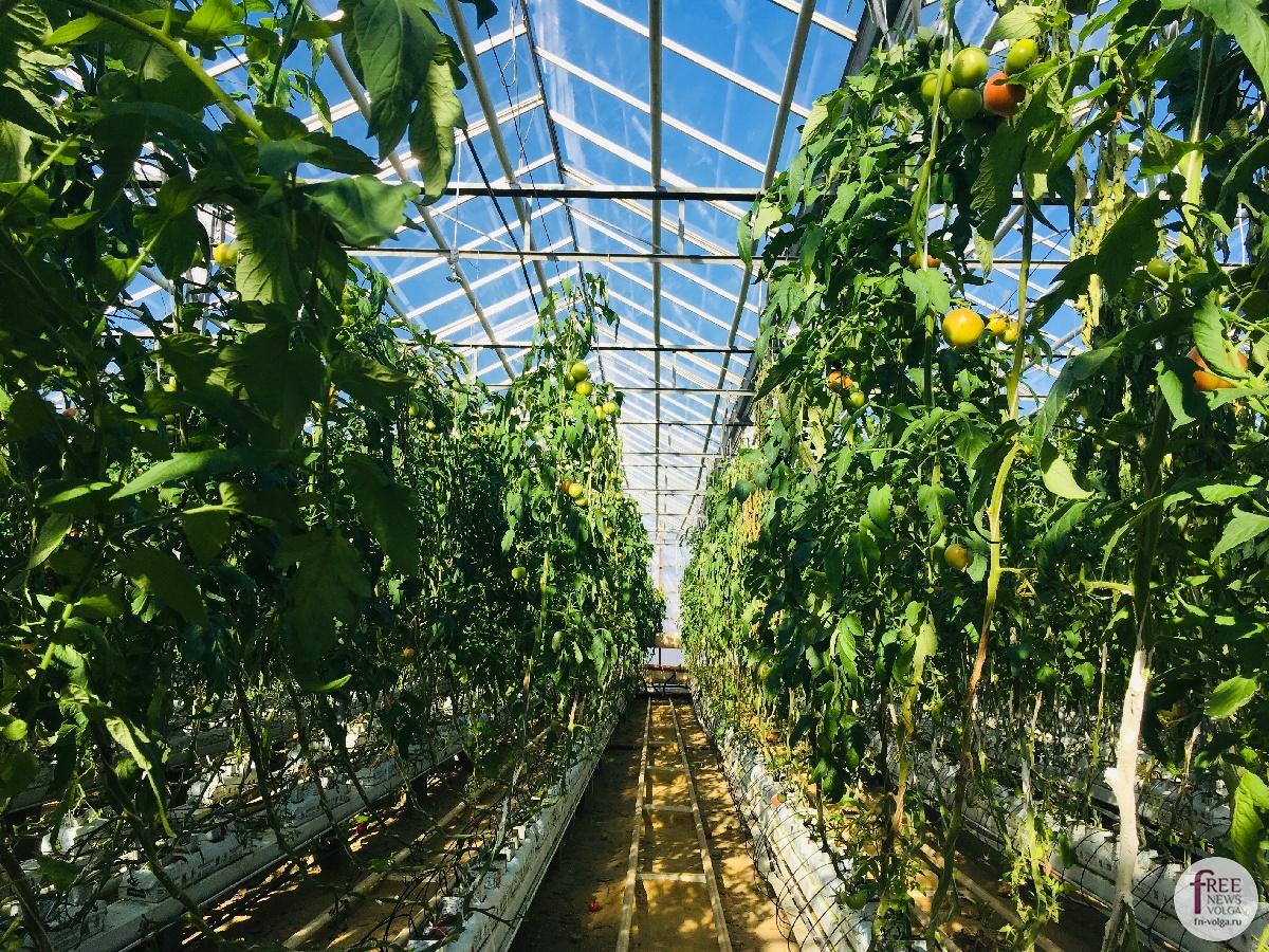 Изображение - Кто выращивает овощи 1540401628_893921946