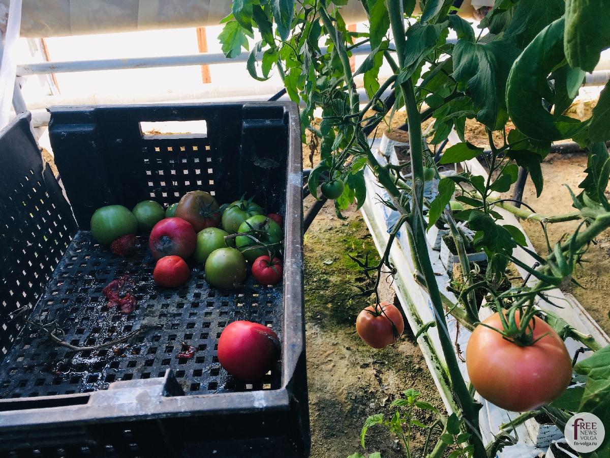 Изображение - Кто выращивает овощи 1540401632_1280103407