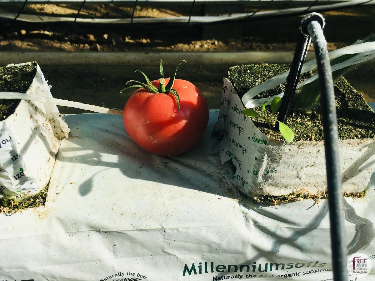 Изображение - Кто выращивает овощи 1540401640_849031581