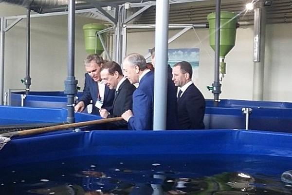 Валерий Радаев демонстрирует Дмитрию Медведеву осетров. Апрель 2016 года
