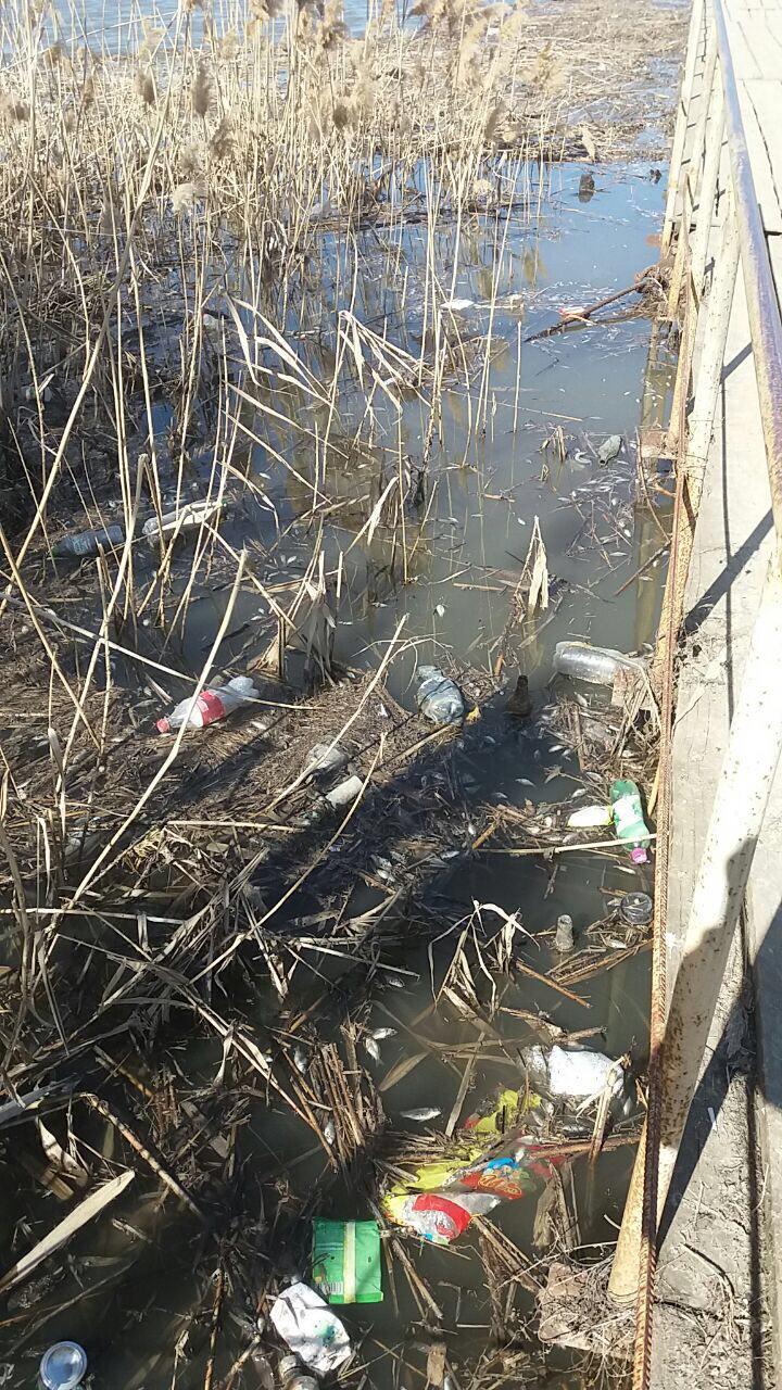 Загрязненная река в Новоузенске.jpg