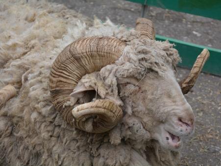 Саратовец убил знакомого бревном, обидевшись наобвинения вкраже барана