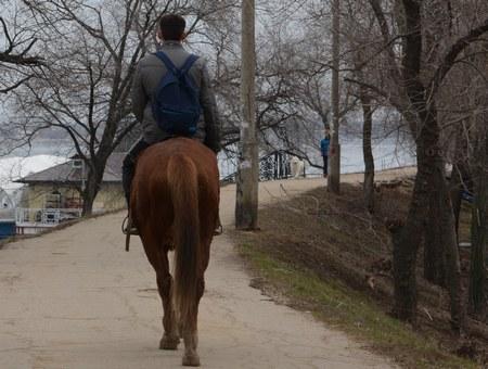 Граждане Саратовской области «увели» двоих лошадей