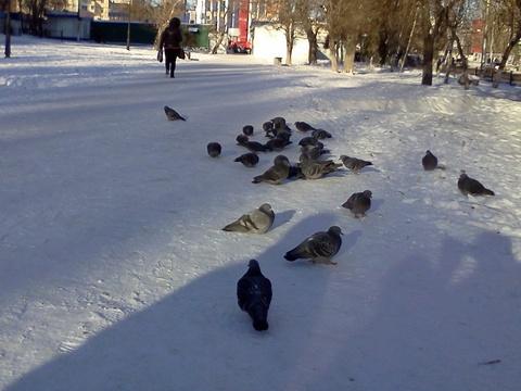 ВСаратовской области похолодает до-27