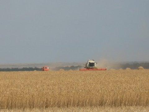 В Российской Федерации недостаток пшеницы для производства хлеба