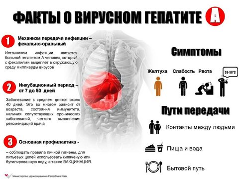 Заболеваемость гепатитом вПермском крае увеличилась в1,5 раза
