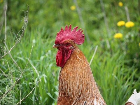ВСаратов запрещен ввоз птиц изТатарстана