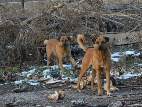 Бродячая собачка покусала 14-летнюю девочку вВольске
