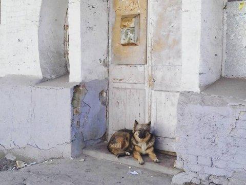 Ветеринары смотрят занапавшей нашкольницу собакой