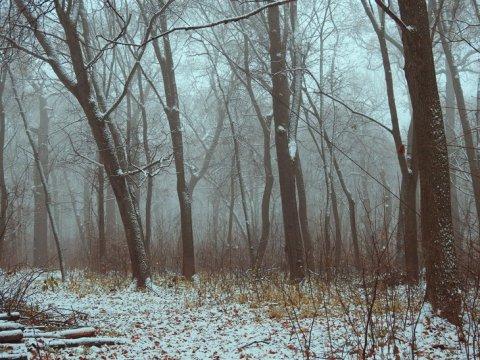 ВСаратове прогнозируют туман игололедицу