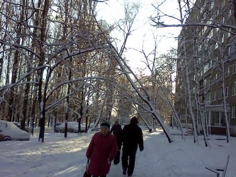 Вцентре Саратова дерево упало настоявшие водворе автомобили
