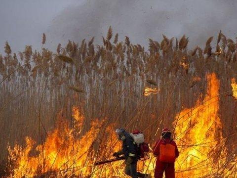 Больше 200 человек эвакуировано излагеря под Саратовом из-за возгорания камыша